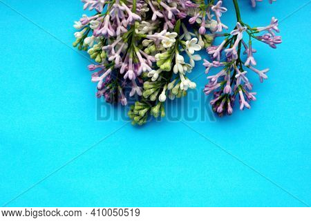 Lilac. A Branch Of Lilac On A Blue Background. Lilac Blooming View From Above. Spring, Plants And Bo