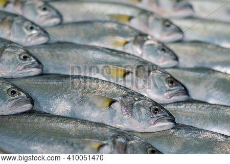 Full-screen Raw Bluefish (pomatomus Saltatrix) Texture With Selective Focus