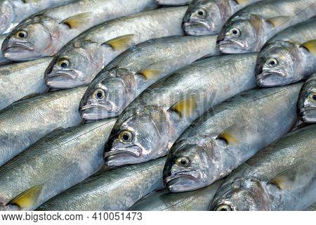 Full Screen Texture Of Raw Bluefish (pomatomus Saltatrix) Arranged Diagonally
