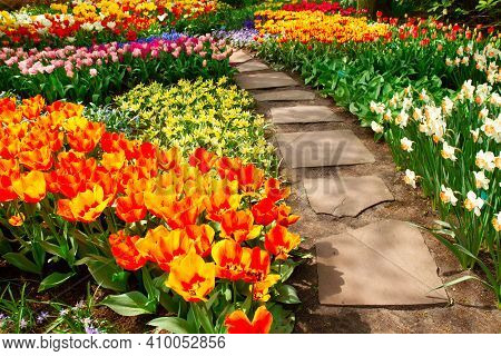 Colourful Fresh Tulips Flowerbeds And Stone Path In An Spring Formal Garden
