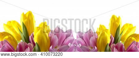 Tulips In A Tulip Field. Bright Tulips. Beautiful Tulips In The Springtime. Colorful Tulip Flower In