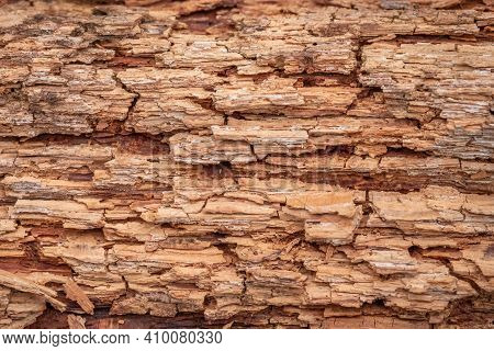 A Background Image Of A Close Up Of The Organic Texture Of A Decomposing Wood Or Log.
