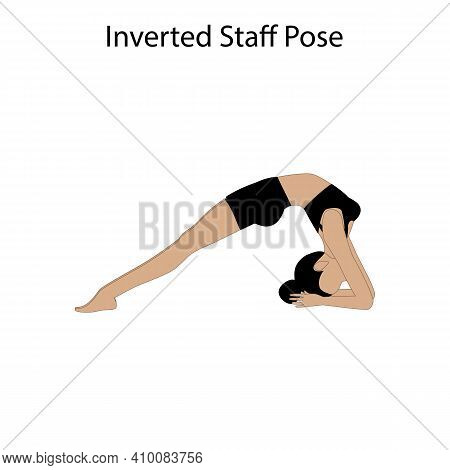 Inverted Staff Pose Yoga Workout. Healthy Lifestyle Vector Illustration
