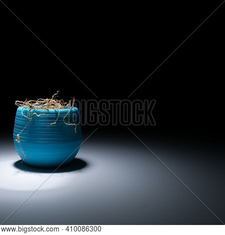 A Faded Flower In A Blue Vase On A Black Background.