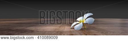 Panoramic_white Plumeria Flower Drop On Empty Wooden Floor Isolated On Background With Clipping Path