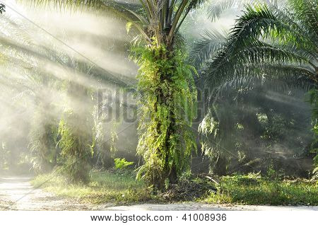 Palm Light Day Outdoor Fog Farm