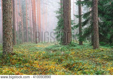Scenic Spring Forest Landscape With Green Moss And Mist. Spring Woodland Background. Soft Background