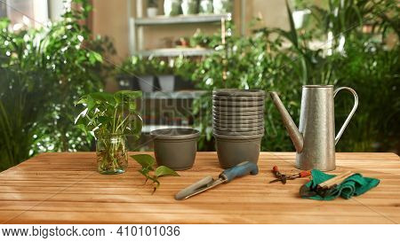 Rooted Outgrowths In Glass Bank Standing On Table Beside Tools For Transplantation, Widescreen. Conc