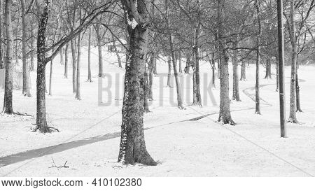 Black And White Snowy Cement Path Winding Through Forested Park In Nashville, Tn.