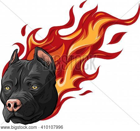 Head Of Dog Pitbull With Flames Vector