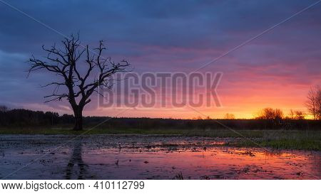 Bright Colorful Dawn In The Early Spring Nature. Dry Tree Against Vivid Sunrise In The Morning Refle