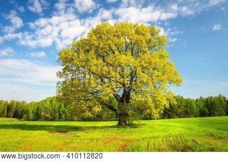 Green Fresh Grass And Leaves On Trees In Springtime. Beautiful Nature Landscape Of Greenfield In Ear