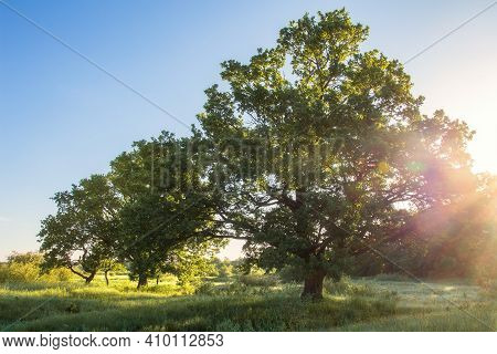 Summer Morning Landscape With Vivid Sunbeams. Green Nature With The Big Tree On The Fresh Meadow. Pi
