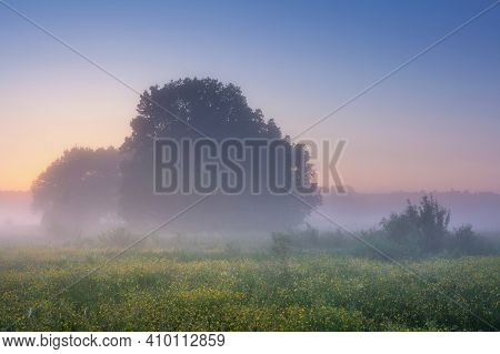 Spring Morning Sunrise On Misty Meadow. Amazing Fresh Nature. Wild Scene Of Trees On Grassy Meadow W