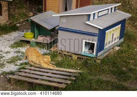 Domegliara, Italy - 02 22 2021: A Cat In A Feline Colony.