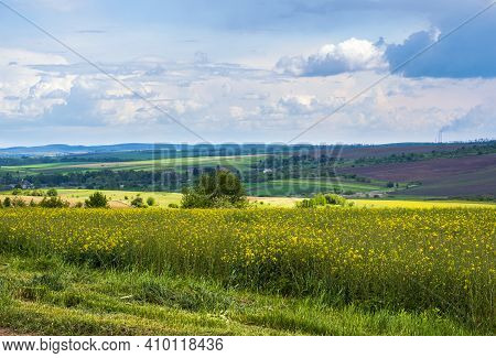 Spring Rapeseed Yellow Blooming Fields Panoramic View, Blue Sky With Clouds In Sunlight. Natural Sea