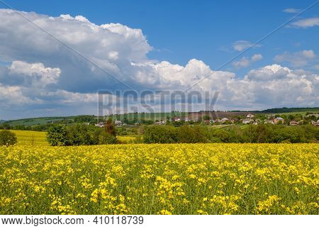 Spring Rapeseed Yellow Blooming Fields View, Blue Sky With Clouds In Sunlight. Natural Seasonal, Goo