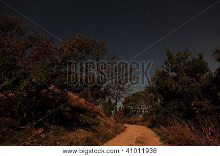 Night Landscape, Lonely Tree In The Night Sky With Moving Stars
