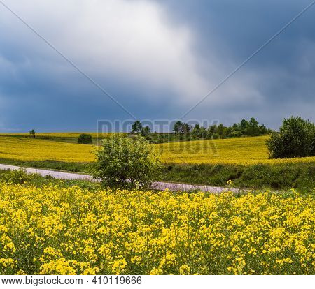 Road Through Spring Rapeseed Yellow Blooming Fields Panoramic View, Sky With Clouds In Sunlight. Nat