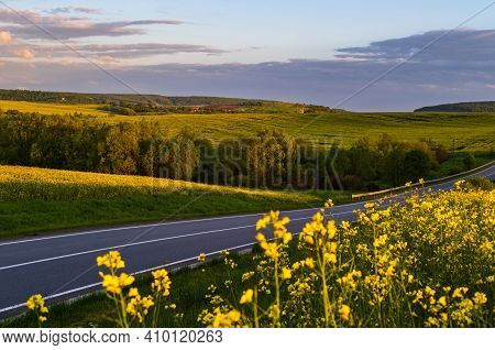 Road Through Spring Evening Rapeseed Yellow Blooming Fields, Sky With Clouds In Sunset Sunlight. Nat