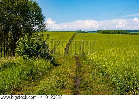 Spring View With Rapeseed Yellow Blooming Fields, Small Grove And Dirty Road, Blue Sky With Clouds.