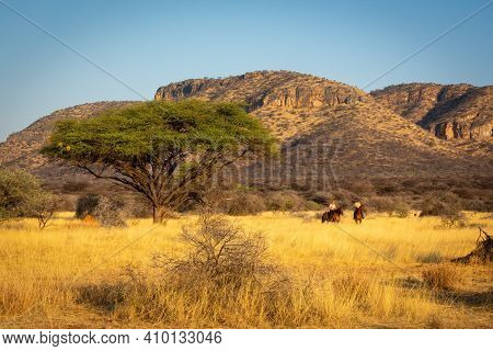 Two Women Riding Past Acacia Near Hills