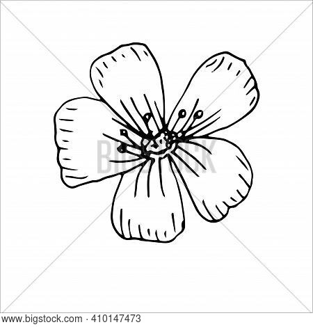 Flax Flower Vector Illustration Hand Drawing Sketch