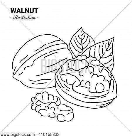 Sketch_nuts-1