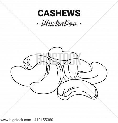 Hand Drawn Cashew. Single, Group Seeds, Cashew. Organic Nut, Vector Doodle Illustrations Collection