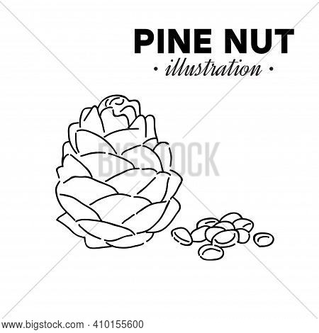 Hand Drawn Pine Nut. Single, Group Seeds, Pine Nut In Nutshells Group. Organic Nut, Vector Doodle Il