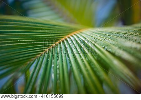 Tropical Palm Leaves, Floral Pattern Background. Exotic Nature Texture. Green Leaves Of Tropical For