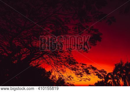 Warm Bright Sunset Or Sunrise With Silhouette Of Trees In Tropics
