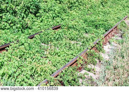 Abandoned Rail Tracks With Plants And Green Trees Around. Abandoned Concept.