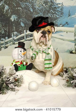 Bulldog And Snowman