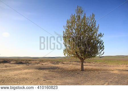 On A Sandy Glade In The Altyn-emel Steppe, On The Right, There Is A Green Tree, Clear Sky, Hills In