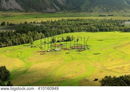 In The Valley Of The Chulyshman River In Altai, There Is A Large Green Meadow, In The Middle Of The