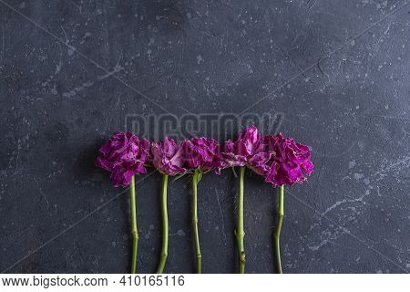 Flat Lay Composition With Withered Dried Roses On Dark Background In Vintage Rustic Style. Concept O