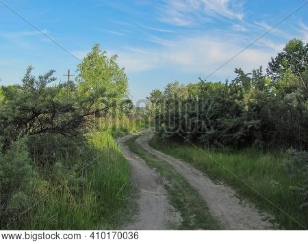 Dirt Road Among Green Bushes Under Blue Sky