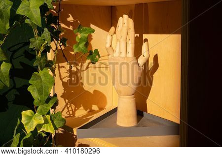 Wooden Hand In The Shade. Green Plant.