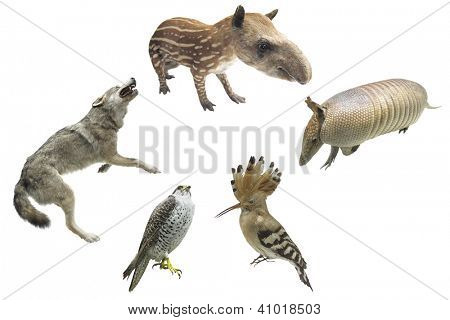 The image of different animals