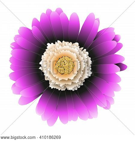 Close-up Pink Gerbera Flower Isolated On White Background. Vector Illustration