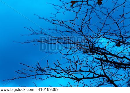 Photo Of A Mystical Fantasy Forest. Silhouettes Of Trunks And Branches. Fog And Twilight Blue Sky. M