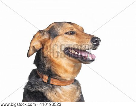 cute shelter dog portrait on a white isolated background