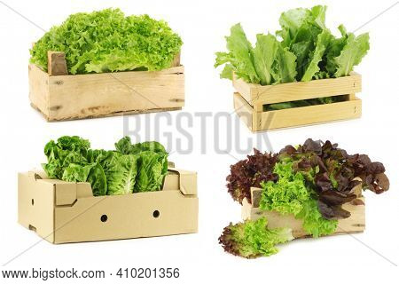 Fresh salad vegetables in a wooden crate on a white background