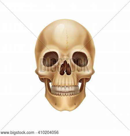 Human Skull. Realistic Anatomical Model, Dead Mans Head Bones. Medical 3d Illustration. Isolated Par