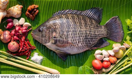 Fresh Big Plentiful Fat Tilapia Fish Fillet With Ingredients For Cooking Tom Yum On Banana Leaves, T