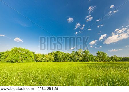 Sunny View Of Spring Summer Landscape Green Tree Forest On A Green Meadow With Blue Cloudy Sky On Th