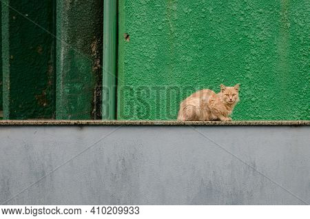 Ginger Cat Sits On A Fence Of Bright Green And Gray Color. Empty Place For Text, Copy Space.