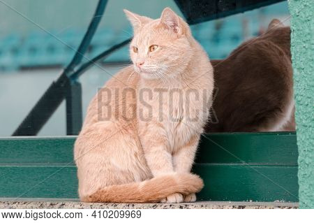 Peach Colored Cat Sits On The Windowsill And Waits. Sweet Street Cat