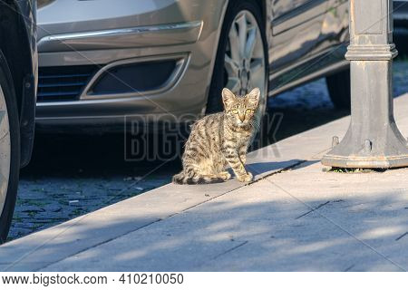 Homeless Little Street Cat Among The Cars Looking At The Camera.